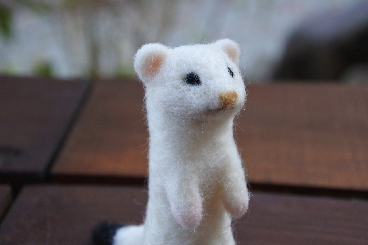 ペット オコジョ ペットとしても飼われているイタチ。イタチの歴史や特徴、種類やエサまで総解説!