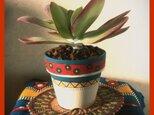多肉植物用 ペイント鉢の画像