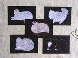 flat-facedcats ポストカードセットの画像