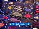 2017深海生物図鑑カレンダー(エコパック)の画像