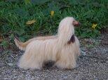 羊毛フェルトの犬人形(アフガンハウンド)の画像