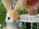 ビロードじゃないウサギさんの画像