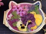 送料無料 再販 ギフトに 猫型コンパクトキラキラ押し花を閉じ込めての画像