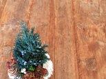 再販 Christmas forest  (ジュニパー)の画像