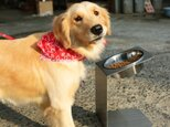 大型犬チョイななめスタンド【大~中型犬】 洗えるステンレスフードスタンドの画像