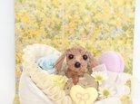 お花で作ったミニチュア・ダックスフンド「こんにちは♡赤ちゃん」の画像
