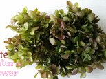 NEW!!夏から秋への香り 紫陽花グリーンボルドー♪の画像