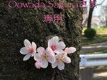 Oowada Sakuraさま専用 淡彩色合掌猫の画像