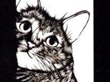 額装済み切り絵作品・猫の画像