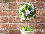【送料無料】バラと紫陽花のトピアリー(ホワイト&グリーン)【プリザーブドフラワー】【ウエディング 開店祝い クリスマス ギフト】の画像