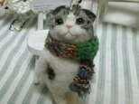 羊毛立ち猫 スコティッシュ オーナメントの画像