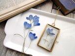 植物標本 ■押し花フレーム ガーランド■Short Slim デルフィニュームの画像