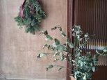 フレッシュグリーンのミニクリスマススワッグの画像