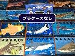 2019サメ図鑑カレンダー(エコパック)の画像