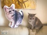 ✩オーダーメイド 45cm✩ ワンちゃん、猫ちゃんのオーダークッションの画像