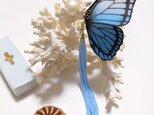 蝶のピアス(大)モルフォの画像