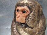 200gAs サルの画像