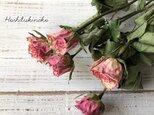 ミニ薔薇 ピンク5輪5本 ドライフラワー花材 スワッグやハーバリウム ボタニカルキャンドルなどに 星月猫の画像