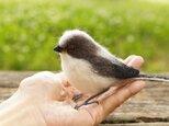 エナガ 幼鳥の画像