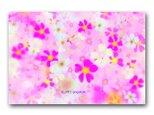 「桜草の詩」春 サクラソウ ほっこり癒しのイラストポストカード2枚組 No.1288の画像