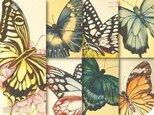 胡蝶標本図:ポストカード集の画像