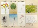 ポストカード・水彩シリーズ よりどり8枚 他の組合せも可の画像