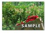 1018)「華やかなバラたち 1018」  5枚組ポストカードの画像