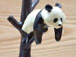 脱力!脱力!雪国パンダ−Aの画像