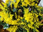 春のフレッシュミモザとハーブのリースの画像