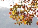フォトパネル*【葉っぱのメロディー】の画像