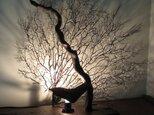 流木とウミウチワの間接照明の画像