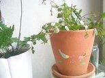 夏鳥の植木鉢の画像