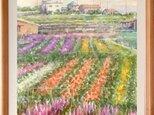 南総千倉のお花畑の画像