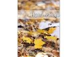 1193)紅葉、黄葉の葉たち   ポストカード5枚組 の画像