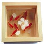 アクリルアート 「桜/sakura」★★春限定作品★★ 本物の桜×3D金魚の画像