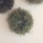 スモークツリーの wreathe 2020年販売開始の画像