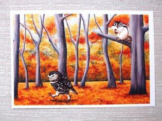 リスとフクロウと黒猫のポストカード。の画像