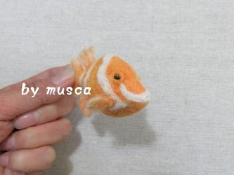 羊毛フグ(ホワイトバードボックスフィッシュ)の画像