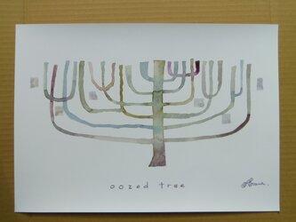 ゆる絵 oozed tree A3の画像