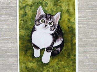 子猫と小鳥のポストカード2枚。の画像