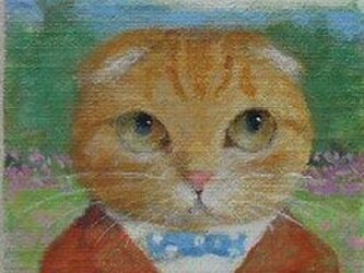 スコティッシュフォールド・オレンジの画像