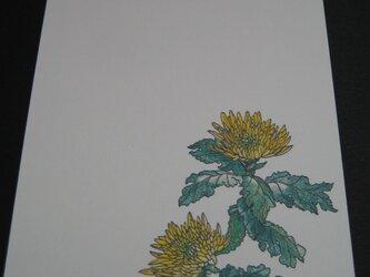 ハガキ 秋の深まり 【黄菊&アザミ&竜胆】 (各1枚 計3枚)の画像