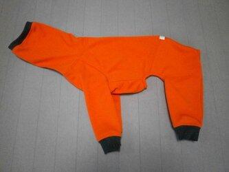 犬服 [受注生産]ウィペット用フルスーツ オレンジの画像