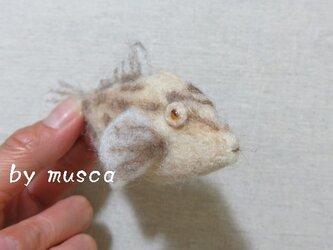 羊毛フグ(ウマヅラハギ)の画像