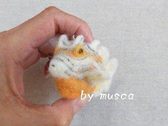羊毛フグ(オルネイトカウフィッシュ)の画像
