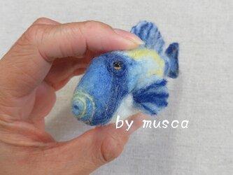 羊毛フグ(ホースシューレザージャケット)の画像