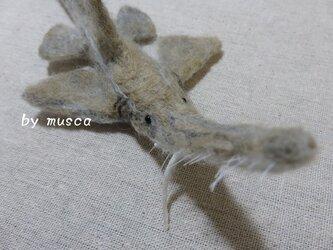 羊毛サメ(ノコギリザメ)の画像
