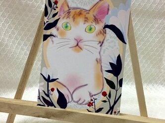 猫ポストカード(組み合わせ自由2枚組)の画像