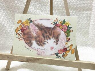 猫ポストカード(組み合わせ自由5枚組)の画像