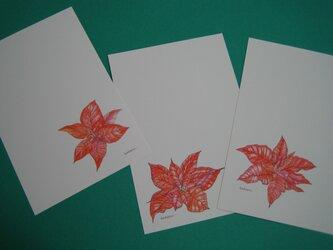 ハガキ 冬の彩り 【ポインセチア3種】 (各1枚 計3枚)の画像
